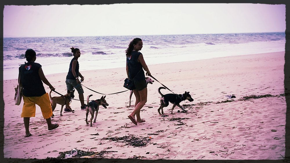 Walking rescue dogs on the beach