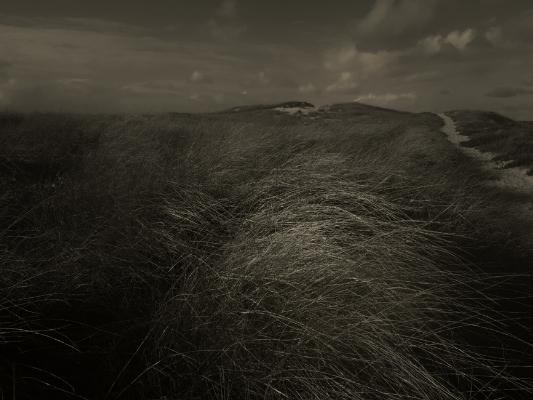 Luís Barreira  Dunas - Costa de Caparica, 2014  Série:    Landscapes     fotografia