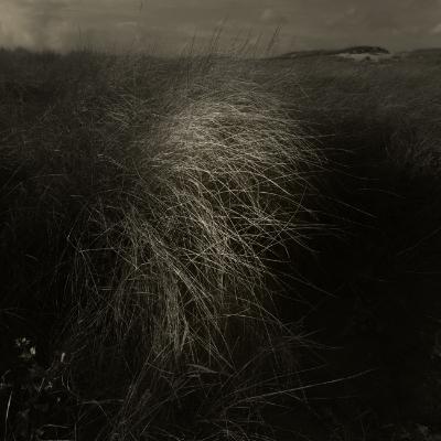 Luís Barreira  Dunas, 2014  Série:    Landscapes     fotografia