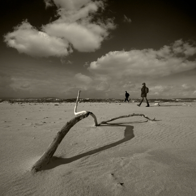 Luís Barreira  tronco na praia da cova do vapor, 2014  série:    Landscapes     fotografia
