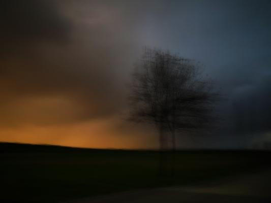 Luís Barreira  Tempestade no parque, 2016  série:      p      r o t o g r a f i a s     fotografia