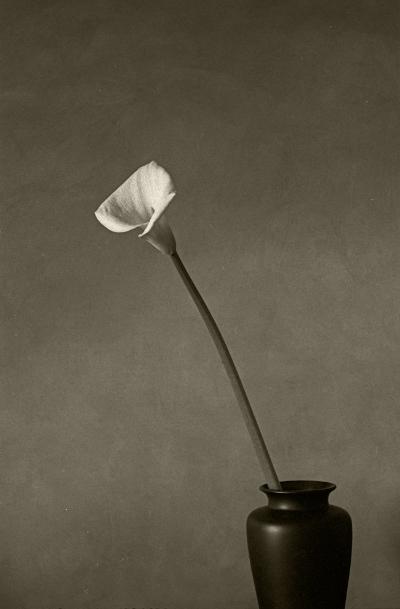 Luís Barreira  Jarro num vaso, 1994  Fotografia  Gelatin-Silver Print  arquivo:F_196_12205, 1994  Série:   still life