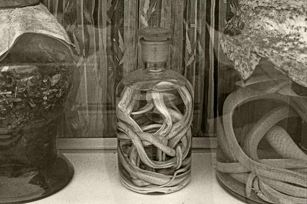 Luís Barreira  pharmacy -snakes,China, 1996  Fotografia  Gelatin-Silver Print