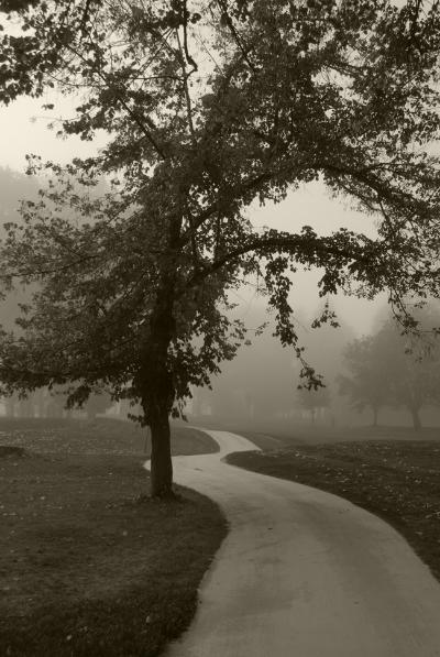 """Luís Barreira  Vidago, 2011  Fotografia  Série:  """"quando estas árvores se desnudam descobrem as minhas raízes""""   arquivo:10_28_NIK_0037, 2011"""