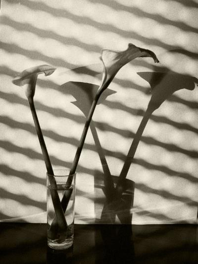 Luís Barreira  Jarros, 1992  Fotografia  Gelatin Silver print  Série:   still life    arquivo:F_139_10319, 1992