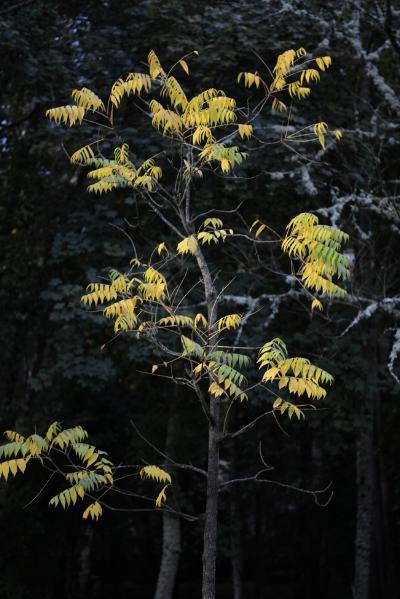 """Luís Barreira  s/título, 2013  Vidago  Fotografia  série: """"quando estas árvores se desnudam descobrem as minhas raízes"""""""