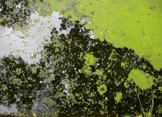 """Luís Barreira s/título, 2005 Vidago Fotografia série:""""quando estas árvores se desnudam descobrem as minhas raízes"""""""
