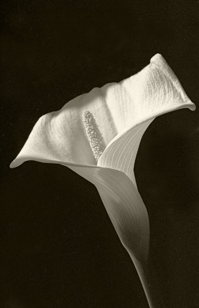 Luís Barreira Jarro serie: Still Life Fotografia Gelatin Silver print arquivo: F_133_10086, 1990