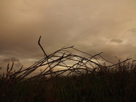 Luís Barreira  s/título, 2013   no parque  (LISBOA)  Fotografia  Série:  Landscape   arquivo: #12_4220, 2013