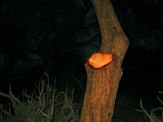 Luís Barreira  árvore  no parque, Lisboa, 2013  Fotografia  arquivo: #12_4265, 2013