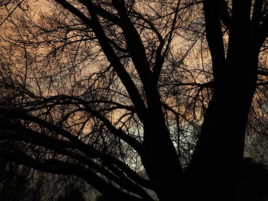 Luís Barreira árvores, 2013 no parque, Lisboa fotografia arquivo: #12_4253, 2013