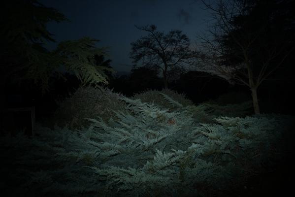 Luís Barreira  s/título, 2017  série: no parque  Fotografia  arquivo:02_4645, 2017