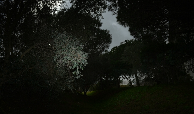 Luís Barreira  no parque  Lisboa, 2017  Fotografia  Série: no parque  arquivo:02_14701, 2017