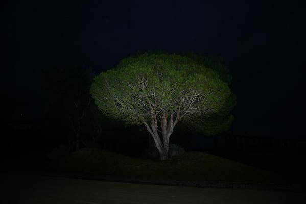 Luís Barreira pinheiro manso, 2017 Lisboa Fotografia série: no parque arquivo:02_14747, 2017