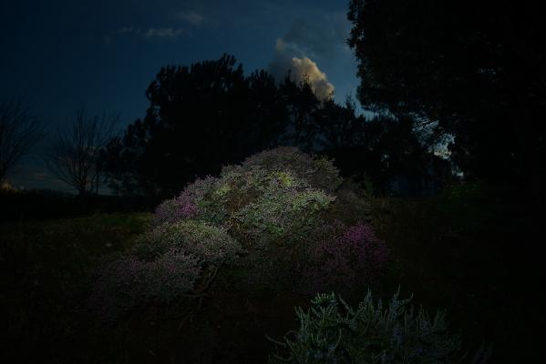 Luís Barreira  winter colours  no parque, 2017  Fotografia  série: no parque  arquivo:02_14865, 2017