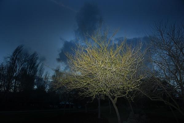 Luís Barreira winter colors III Fotografia Série: no parque arquivo:02_14871, 2017