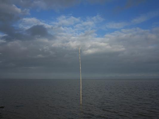 Luís Barreira  vertical, 2012  série:    no parque     fotografia  arquivo:12_1305, 2012