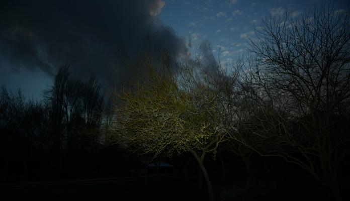 Luís Barreira  winter, 2017  Fotografia  Série: no parque  arquivo:02_14633, 2017