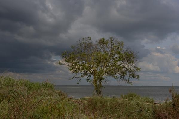 Luís Barreira paisagem #1338 Fotografia série: no parque arquivo:03_1338, 2014