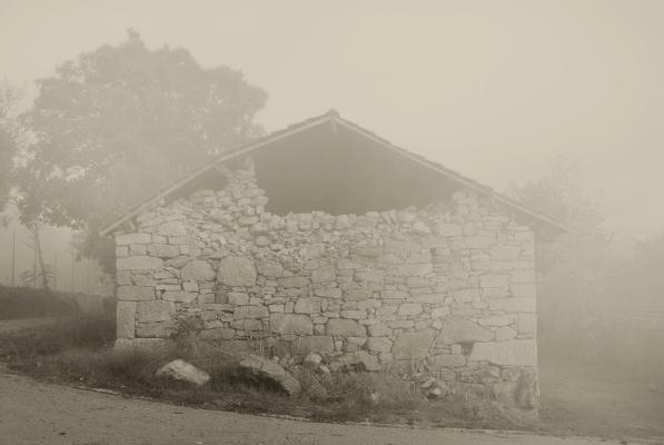 """Luís Barreira  nevoeiro, 2011  Vidago  Fotografia  Série:  """"quando estas árvores se desnudam descobrem as minhas raízes""""   arquivo:10_0065, 2011"""