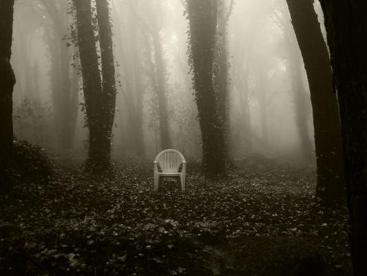 Luís Barreira  cadeira, 2015  parque nacional de sintra  série:  fotografia  arquivo:10_11_IMG_5331, 2015