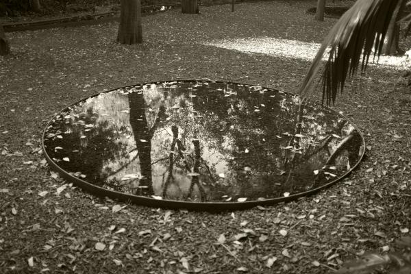 Foto: Luís Barreira  Espelho d'água. Jardim da Gulbenkian, Lisboa  Fotografia  arquivo:10/29/dscf3193, 2017