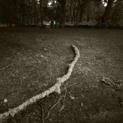 """Luís Barreira   untitled , 13  Vidago  série: """"quando estas árvores se desnudam descobrem as minhas raízes""""  Fotografia  arquivo:10_24_IMG_3378, 2013"""