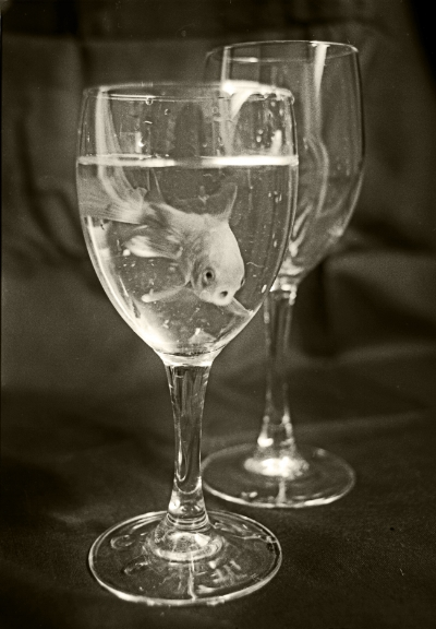 Luís Barreira  Red Fish, 1989  Série:  Fotografia  Gelatin Silver print  arquivo:F_083_15904, 1989