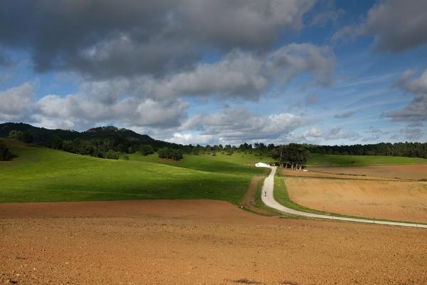 Luís Barreira  Quinta do Pizão, 2018  Série: Landscapes  Fotografia  arquivo:02_13_DSCF5136, 2018