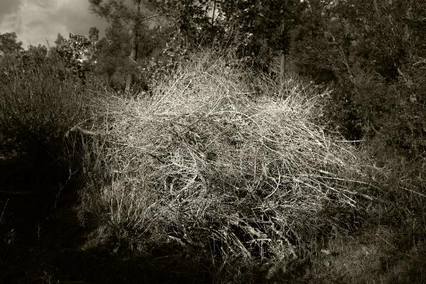 Luís Barreira ars natura, 2018 série: Fotografia arquivo:02_13_dscf5150, 2018