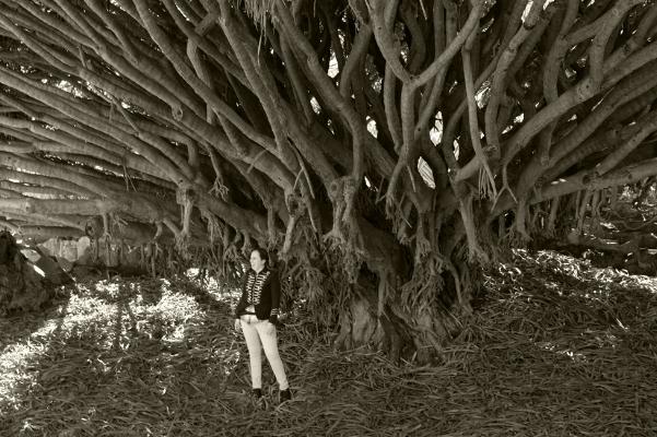 Luís Barreira  Dragoeiro  Jardim Botânico, Lisboa, 2018  Série: Lisboa  Fotografia  arquivo:04/14/dscf7227, 2018