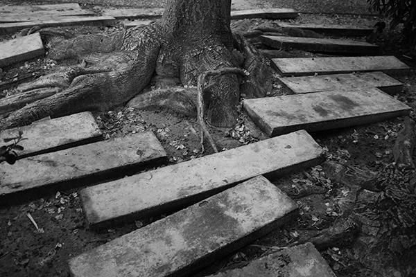 Luís Barreira  outras raízes, 2018  série:  no parque   Fotografia  arquivo: 2018_12_05_DSCF0995
