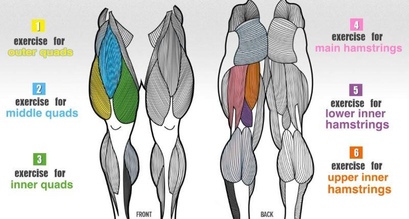 Upper Leg Muscle Workouts — FlexFixx