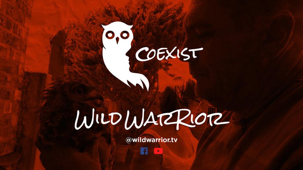 owl-frame.jpg