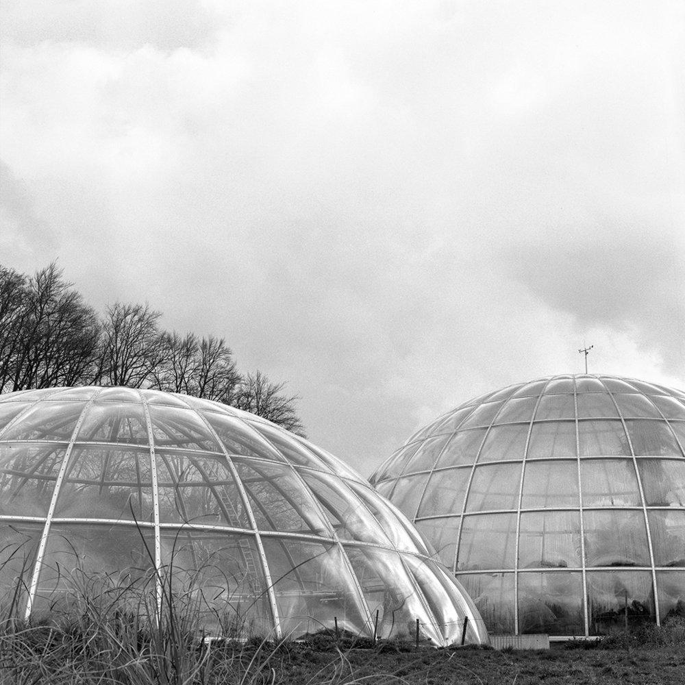 13.03.16 Botanischer Garten , 2016 Archival photographic print framed* 32 x 32 cm