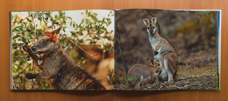 roar media group - roar wild australia coffee table book - limited