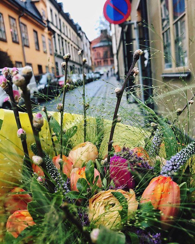 En vildros far ut med bud🌸 . . #vildrosorochtistlar #florist #floriststockholm #instaflower #persikokvistar #adrem #fontängräs #södermalm #mariatorget