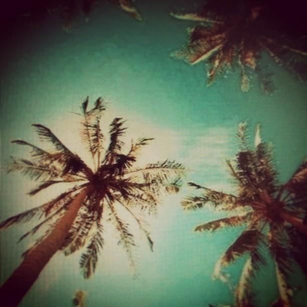 Palms Wrap!