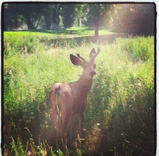 Spotted this guy while running down the Boulder Creek Path.