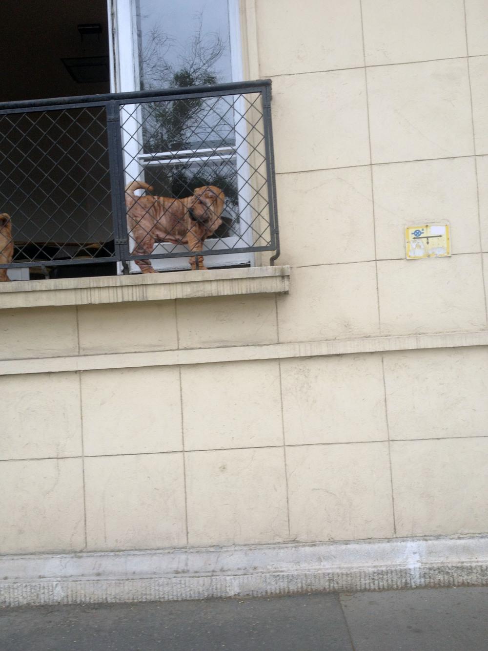 dog in budapest.jpg