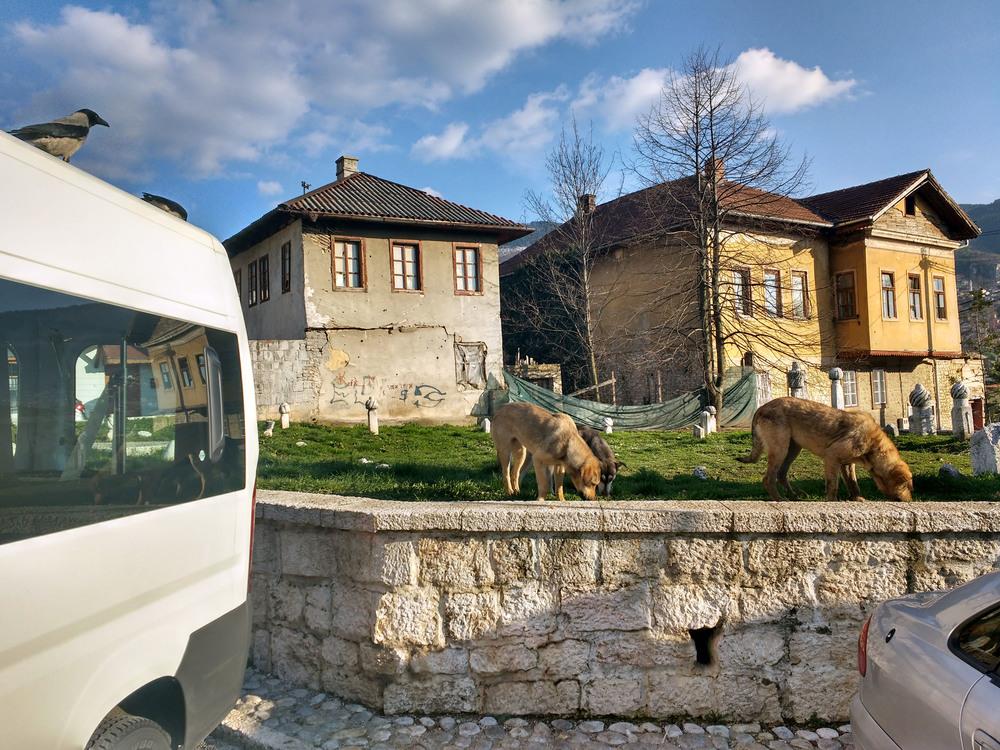 Strays, Sarajevo, Bosnia