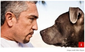 Cesar Milan Site Content Marketing