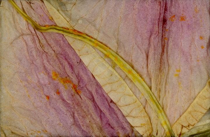 petals-2015-218b.jpg