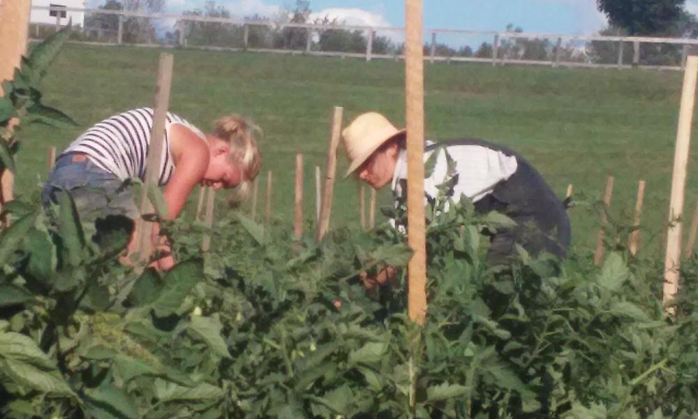 farming at Liberty Farm.jpg