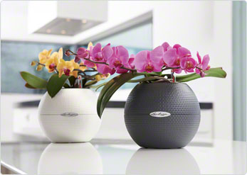 Puro pots - perfect for orchids or houseplants