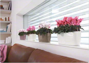 Delta 10 rectangular pots great for window ledges