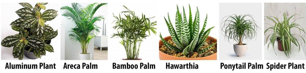 Pet Friendly Indoor Plants.jpg