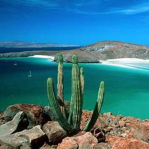 baja cactus ocean.jpg