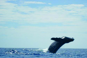 baja whale.jpg