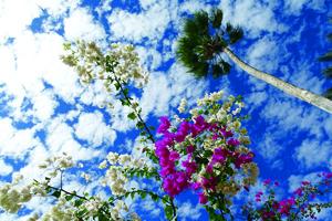 baja sky.jpg
